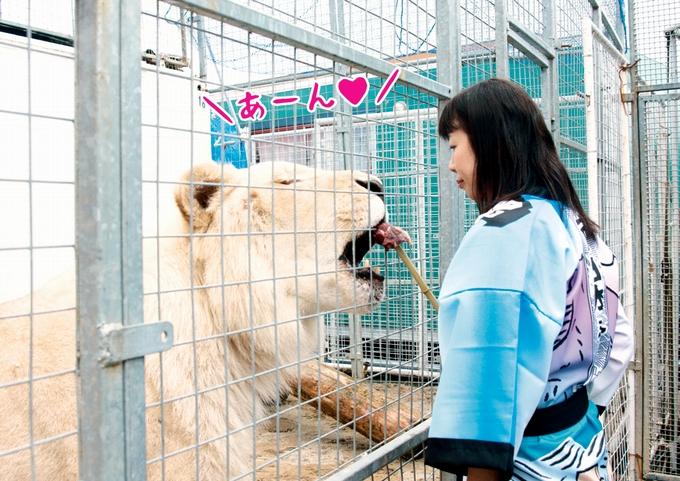 ホワイトライオン ソロモンくんにエサやり