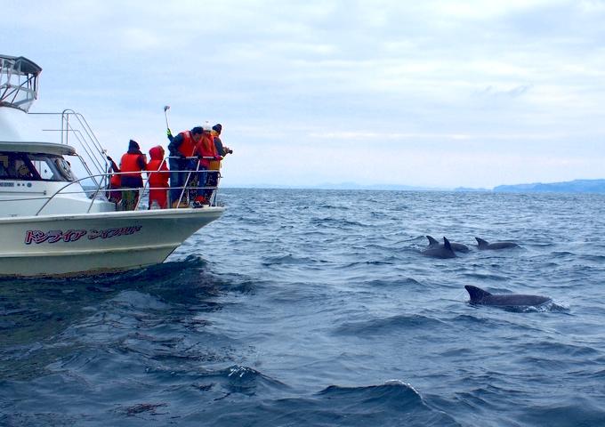 イルカウオッチング