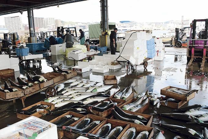 鹿児島中央卸売市場・魚類市場