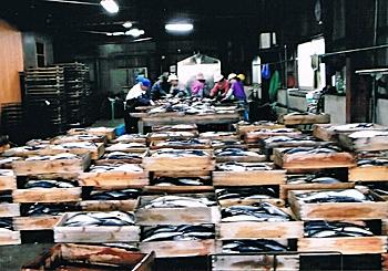 馬場水産のさば節工場