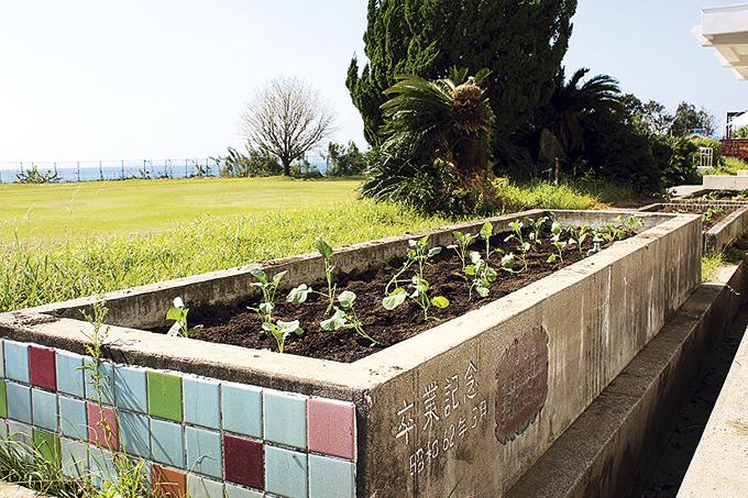 花壇にはブロッコリーの苗。収穫後は食堂で使う予定