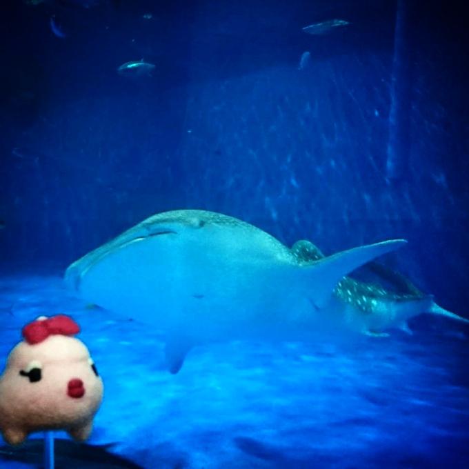 いおワールド かごしま水族館
