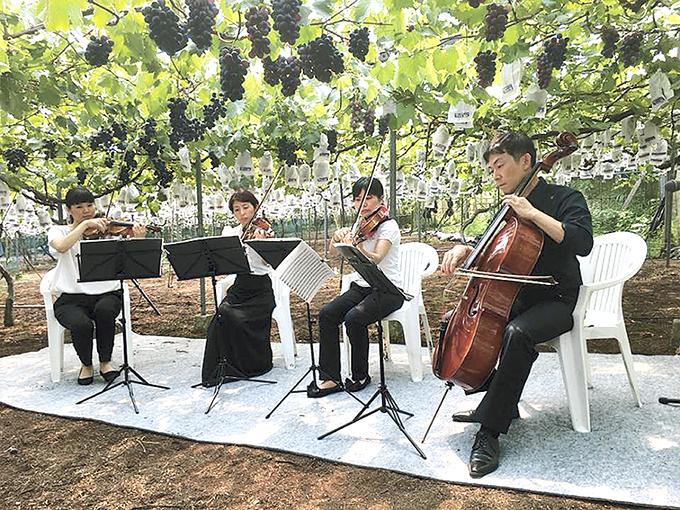 クラシックブドウ浜田農園での弦楽四重奏生演奏