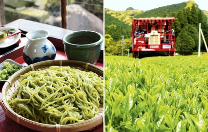 知覧茶畑の新緑が眩しい…武家屋敷群だけじゃない初夏の知覧