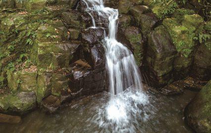 古い記事: 践祚の滝 | 清涼感あふれるパワースポット(薩摩川内市入来)