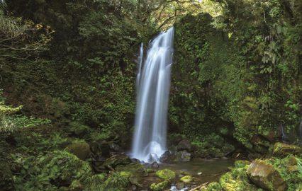 古い記事: 滝之下の滝 | 清涼感あふれるパワースポットで癒やしを(鹿児