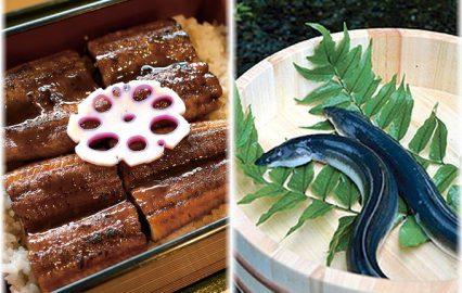日本の夏の味覚 希少食材のウナギ