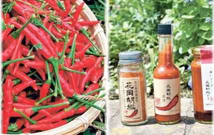 古い記事: 唐辛子「花岡胡椒」が半世紀ぶりに復活したが、収穫が大変なのだ
