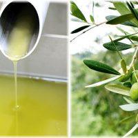 鹿児島・日置産のオリーブオイル。グルメなアナタに使ってほしい