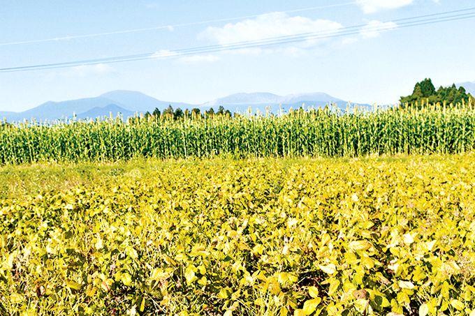 2ヘクタールの大豆畑