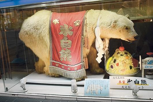 天文館むじゃき本店「白熊のはく製」