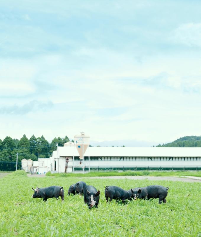 くろぶたの丘(南州農場)