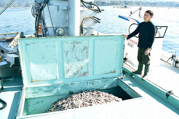 養殖カンパチ/船内でブレンドするエサ