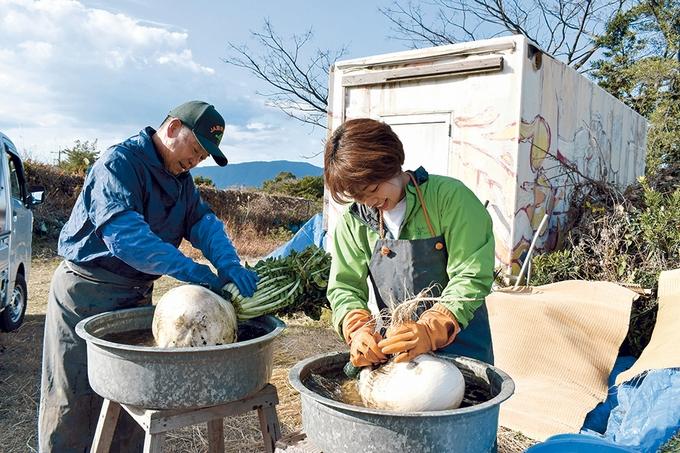 桜島大根を水洗い「ファームランド櫻島」