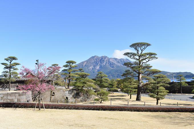 名勝 仙巌園から望む桜島