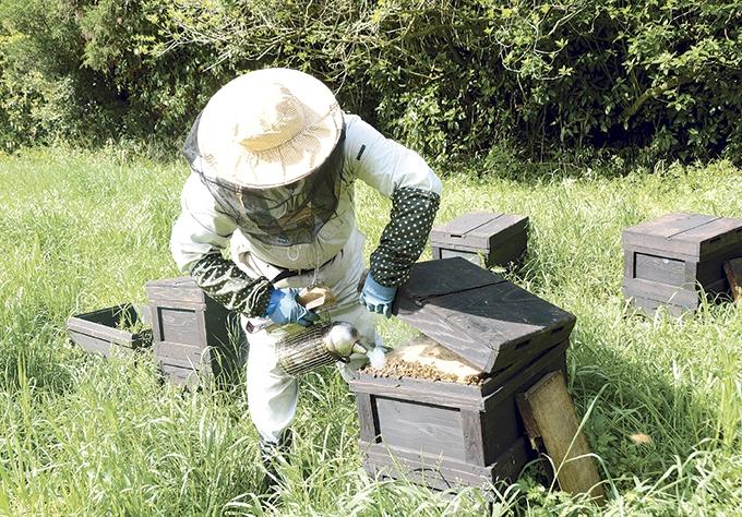 新屋養蜂場「巣箱に燻煙」