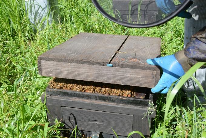 新屋養蜂場「蜂を飼う巣箱」