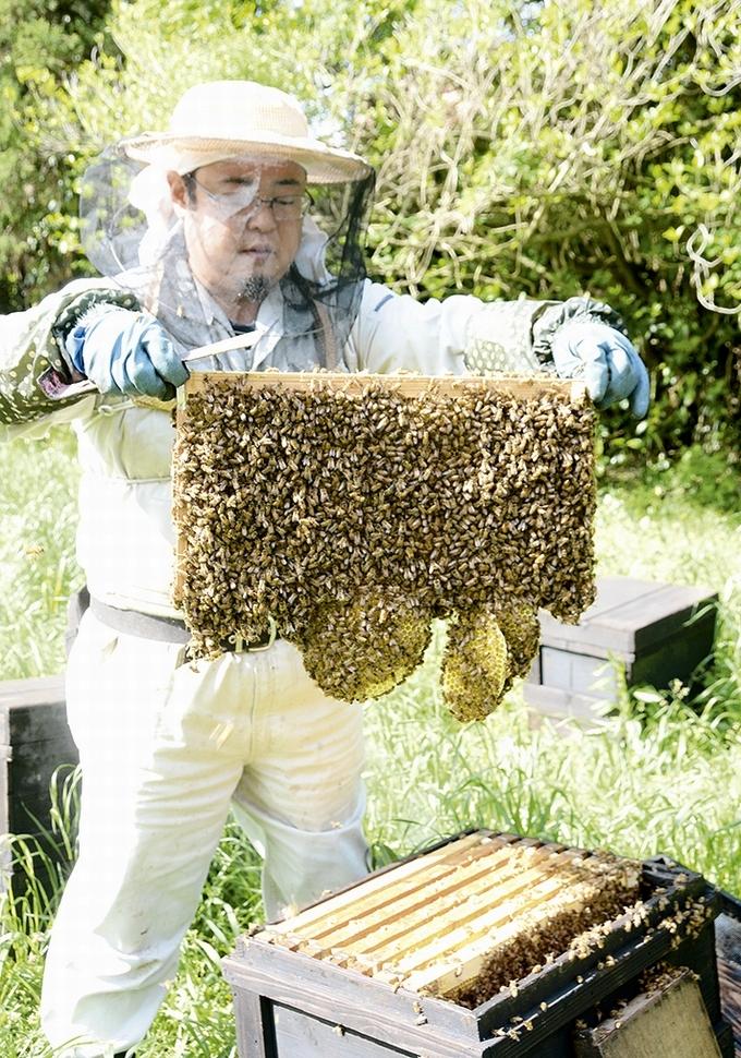 新屋養蜂場「巣枠を取り出す」
