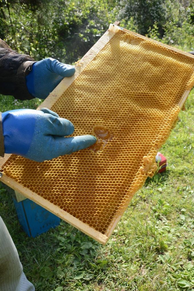 新屋養蜂場「巣枠」