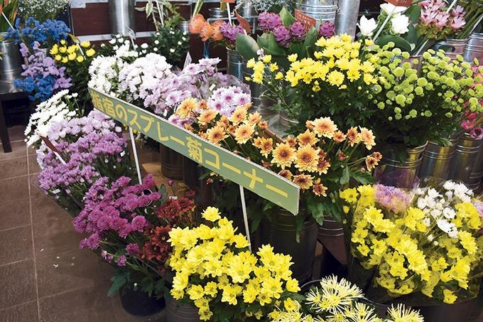 花の店げんかわ えい本店「指宿のスプレー菊コーナー」